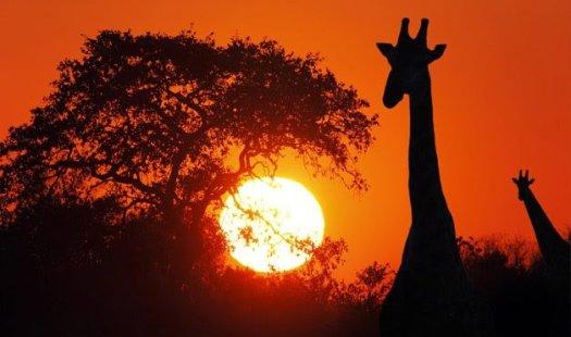 54ea92d1d76f8_-_12-wd0809-botswana-africa-2